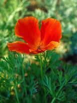 Flower1001